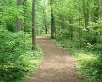 Nature trail jpeg
